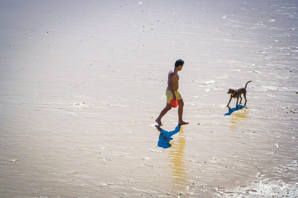 Spiagge per cani in Algarve e Portogallo guida