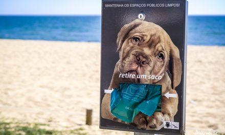 Spiagge per cani in Algarve e Portogallo