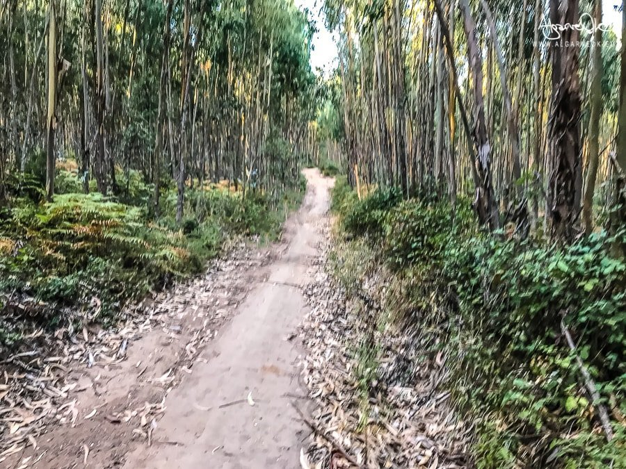 algarve-portogallo-interno-foreste